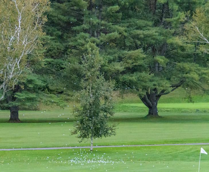 ZP Golf Tournament-_5007956.jpg