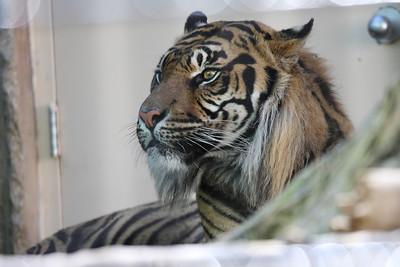 KC Zoo 09