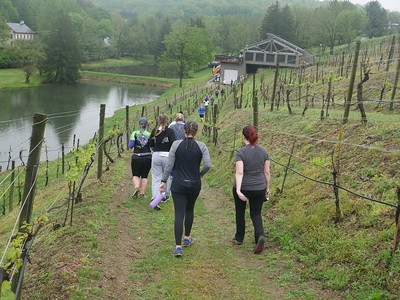 Run the Vineyards - Blue Mountain 5K