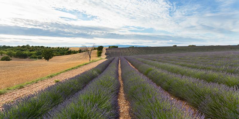 valensole-lavande-lavender_D3_4038-HDR.jpg