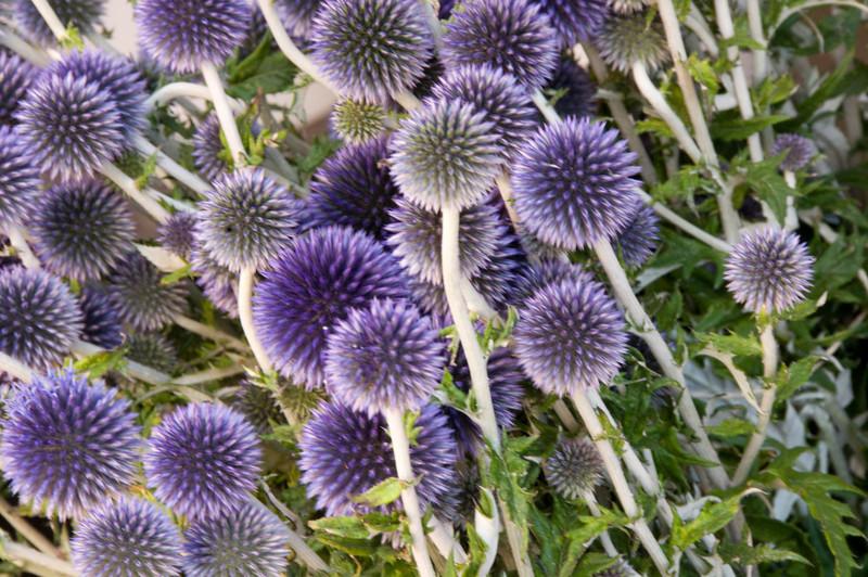 francemarketflowers1