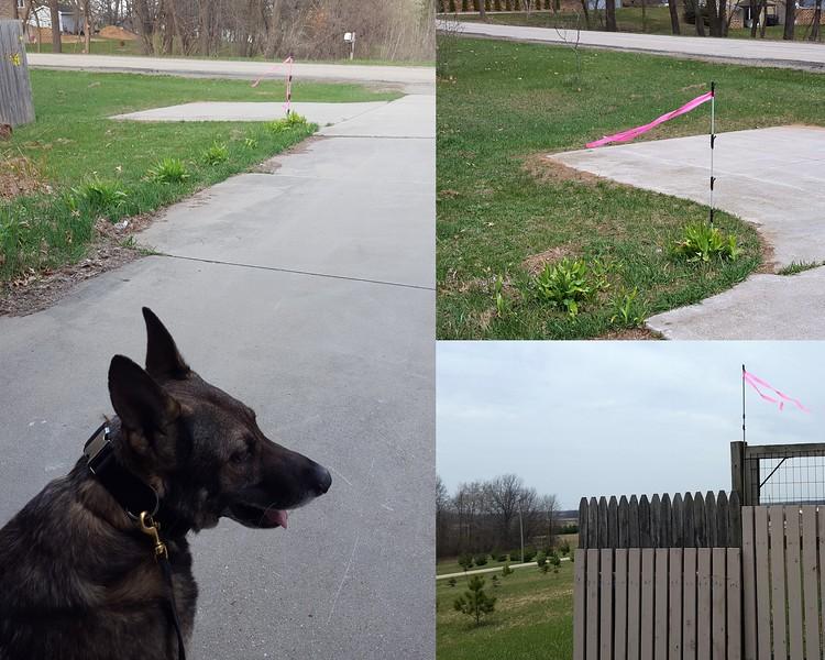 Wind indicators in yard.jpg