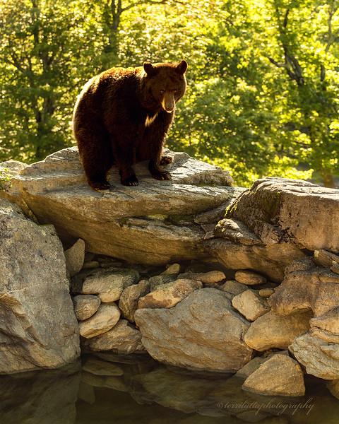 Bear Grandfather jpg.jpg