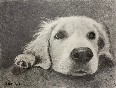 """""""Annabelle"""" (graphite) by Beth Barlow"""