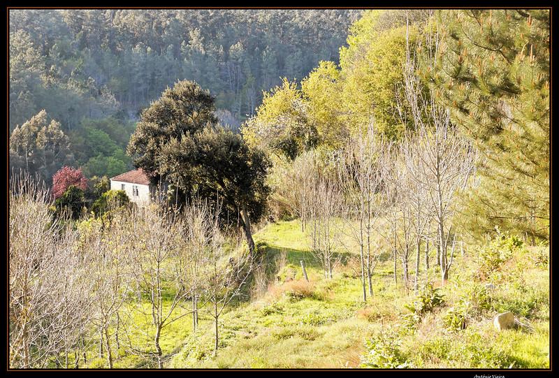 Vouga - 29-03-2008 - 5645.jpg