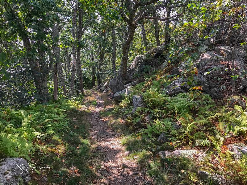 at hike-8961.jpg