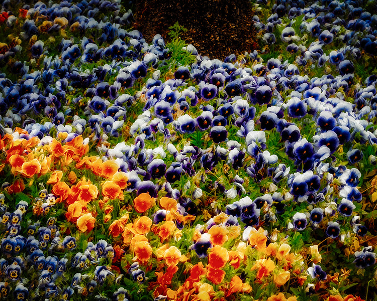colors-copy.jpg