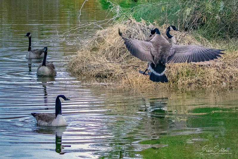 Gilbert Water Park 1-42-2019f-.jpg