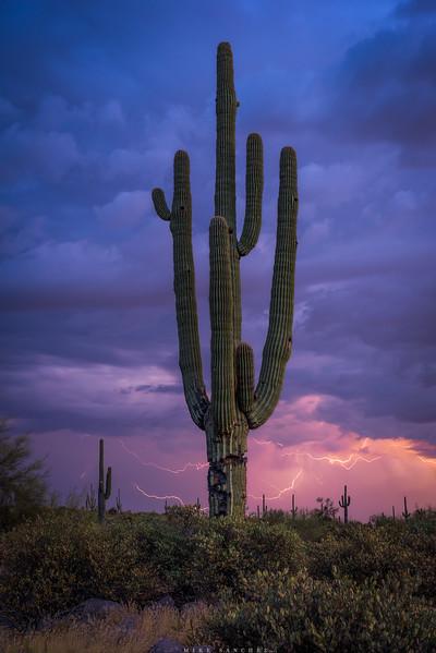 saguaro lightning.JPG