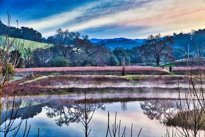 Healdsburg Ridge Open Space - Parkland Farms 2020