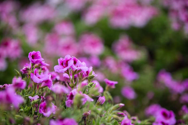 Spring Flowers B-252.jpg