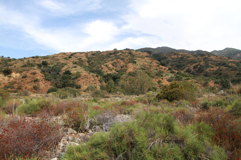 32633-Trabuco-Canyon-Rd-Mitchell-East-Trabuco-Canyon_59.JPG