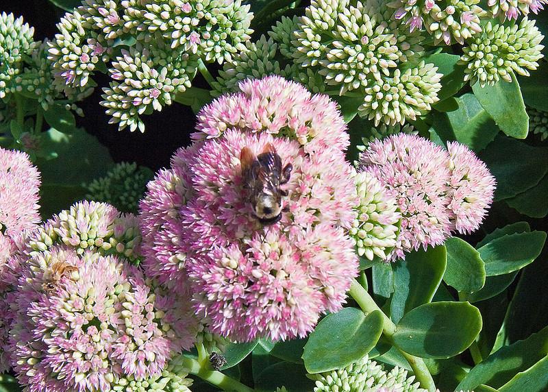2009 09 06_White Flower Farm_0118_edited-2.jpg