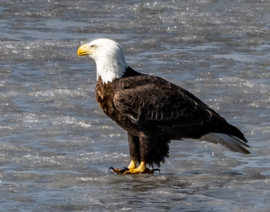 03-17-2020-eagles