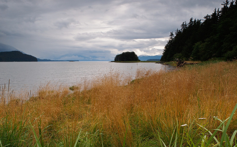 Auke Rec grasses in August. 8/18/11
