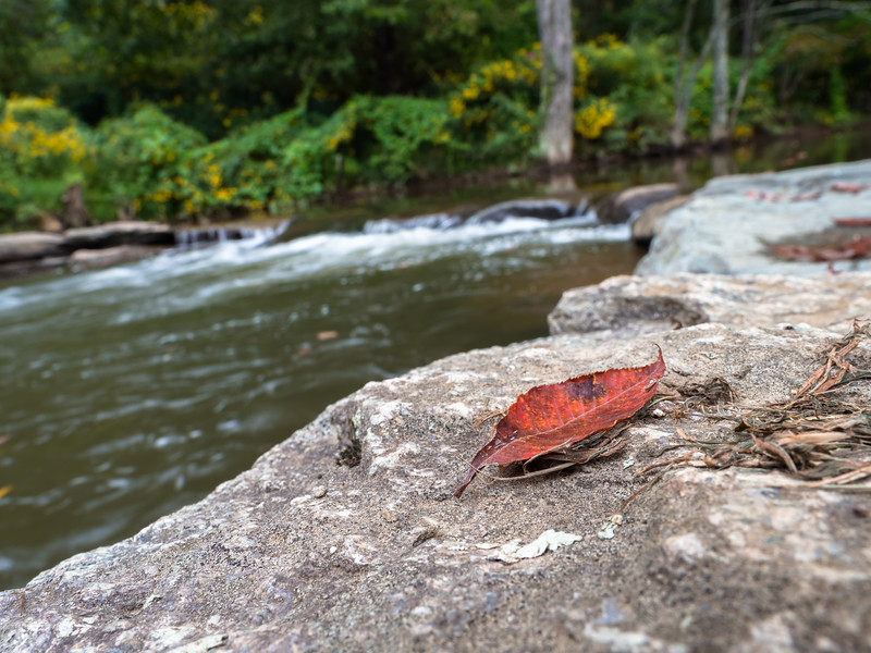 17 Aug 25 Leaf at Big Horse Creek Lansing-1.jpg