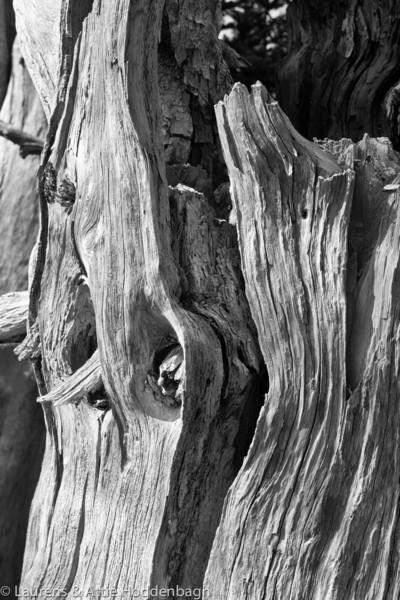 Trees at Hurricane Ridge, Olympic Nat'l Park
