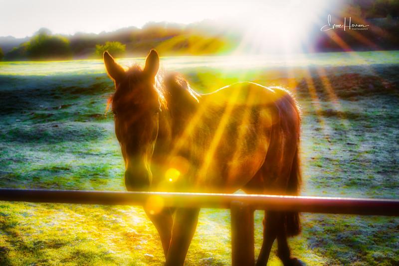 Horse sunlight-1.jpg