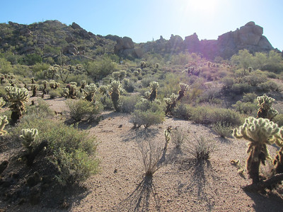 Sonoran Desert at My Place
