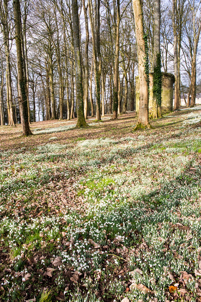 Snowdrops at Pythouse
