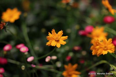 Boston Garden and Flower Show 2010