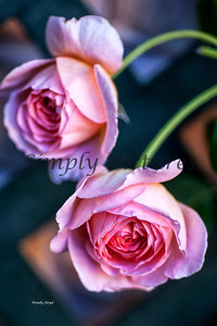 roses  034