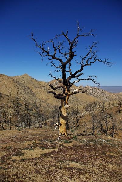 Mid Hills, Mojave National Preserve