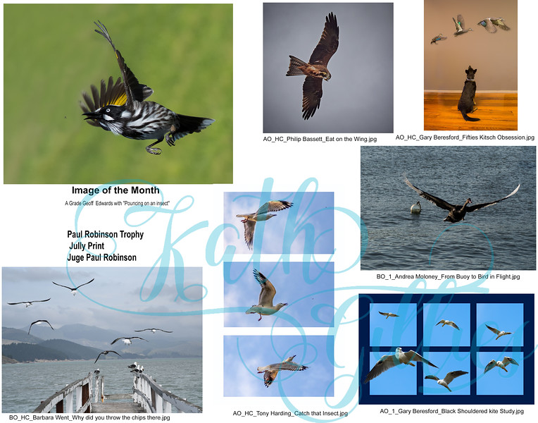 7 Birds Paul robinson print.jpg
