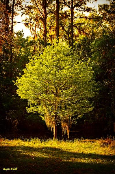 backlittree.jpg