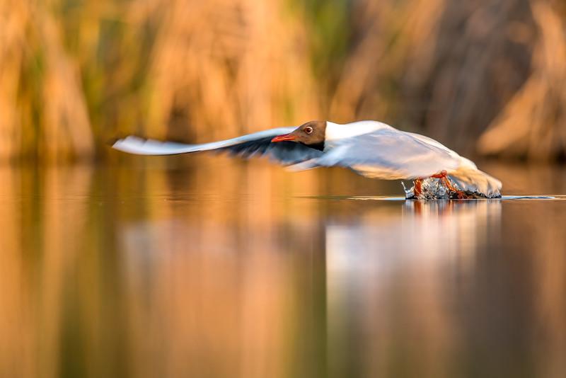 Birder's Corner - Shorebirds