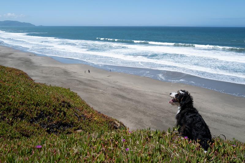 ocean beach quarantine 1183395-17-20.jpg