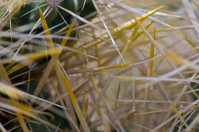 Macro of cholla thorns.