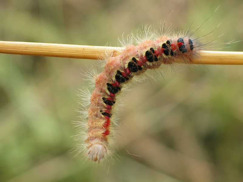Caterpillar 4 pic 2.jpg