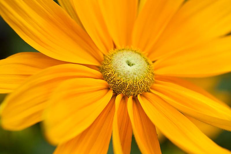 Botanicgarden12-0954.jpg