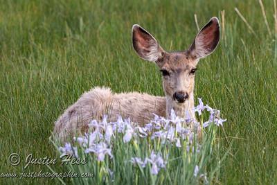 06-08-2021 Deer