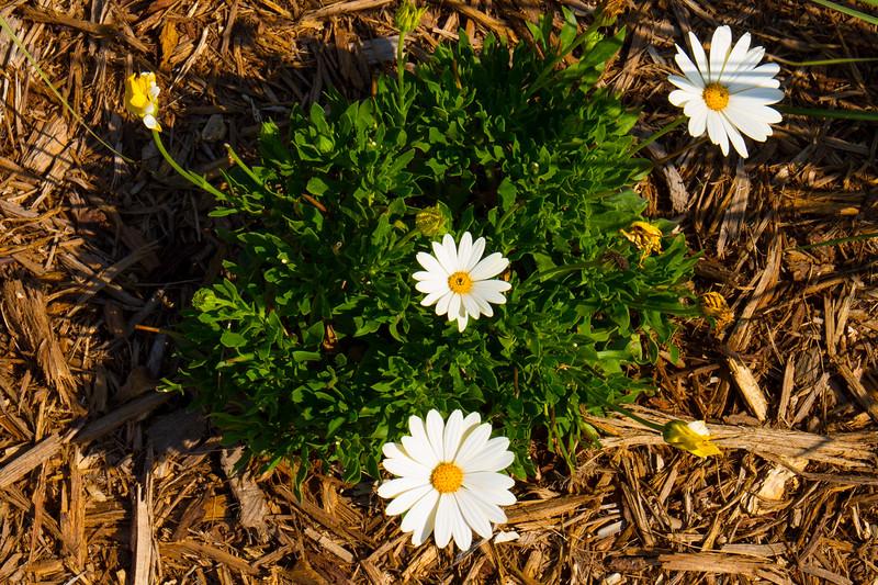 naples_botanical_garden_0005-LR.jpg