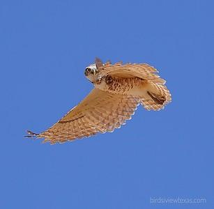 Lubbock in Flight