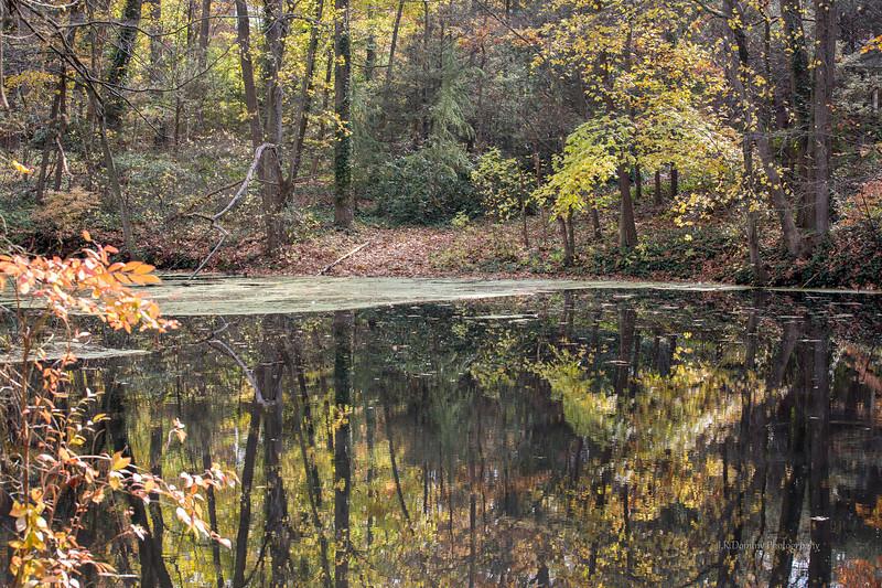 Dilk's Pond