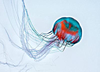New York Aquarium 02/12