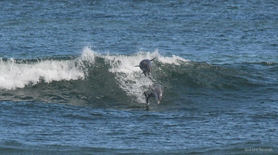NSB Surfing 1-11-21