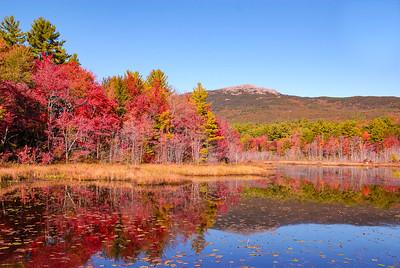 New England Scenics