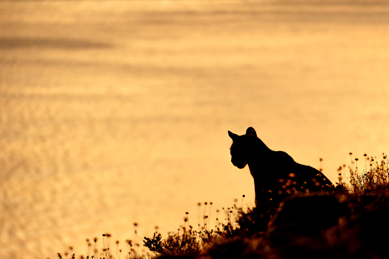 Silhouetted