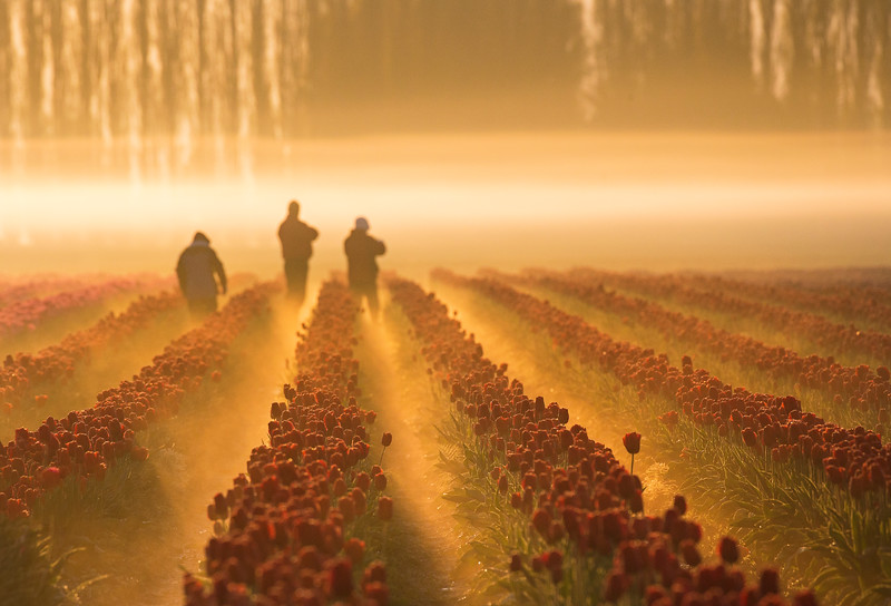 fog and field workers.jpg