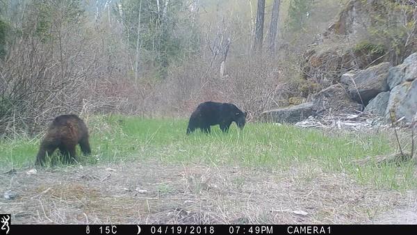 Wildlife videos