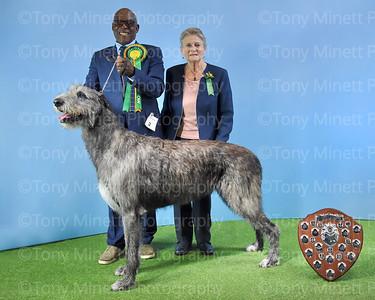 Irish Wolfhound Society 2019 Championship Show