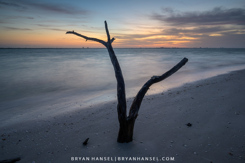 Sanibel Driftwood 9