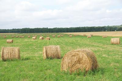 Agrarlandschaften