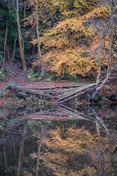 Eavestone Lake, 9 Nov 19-55.jpg