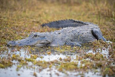 Florida:  Everglades, Orlando and more!