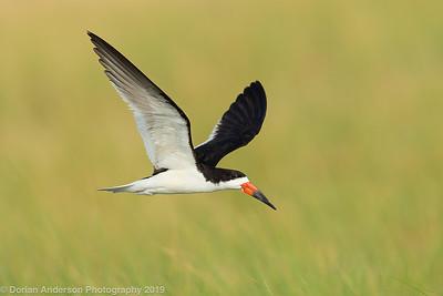 Birds in Flight